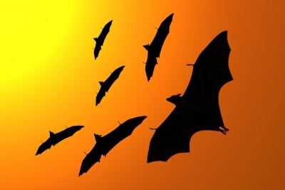 """Silhouette Of Flying Foxes"" by markuso"