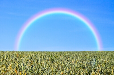 """""""Grass And Rainbow"""" by zirconicusso"""